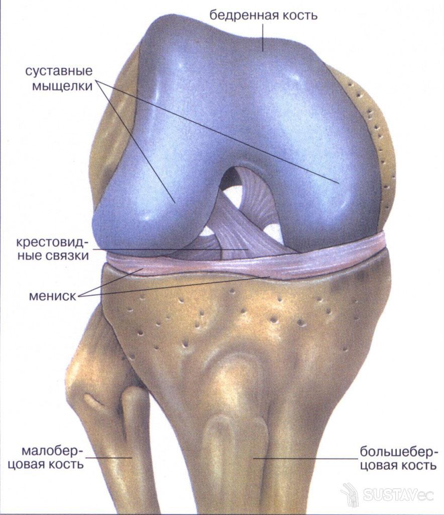 Лигаментоз коленного сустава - что это такое? 6-6
