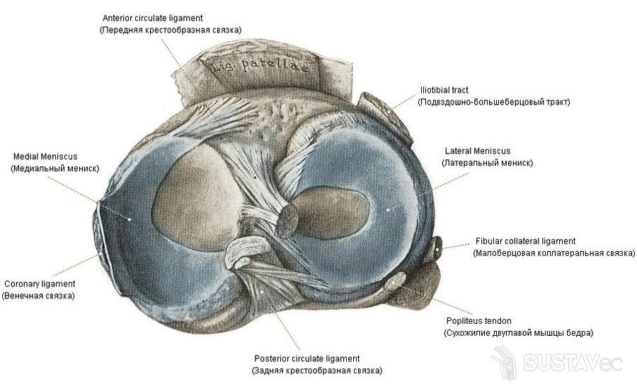 Разрыв медиального мениска коленного сустава: что делать при травме? 22-4
