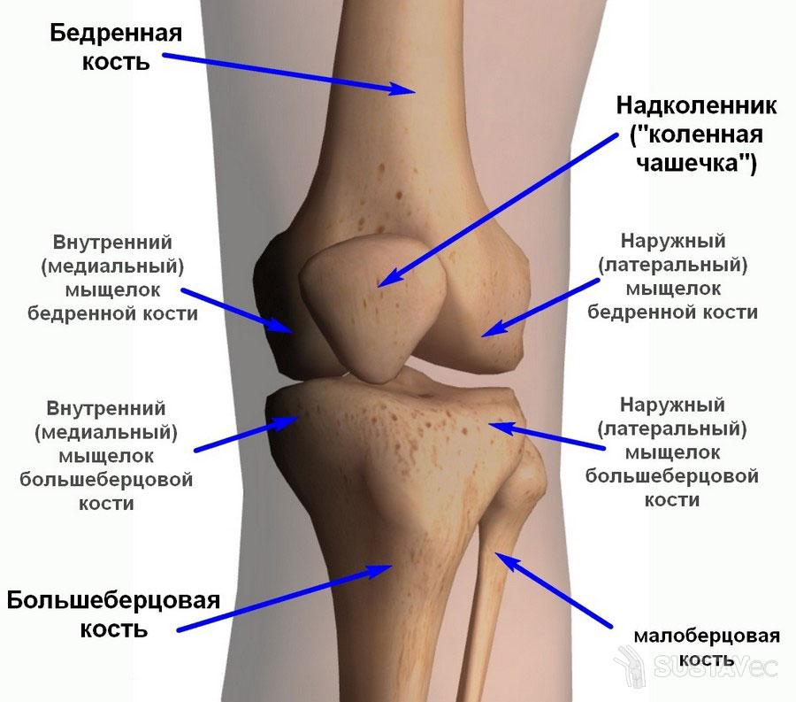 Строение коленного сустава человека и его особенности 72-4
