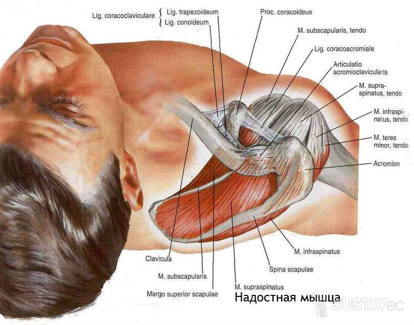 Причины болей в руке от локтя до кисти 56-1